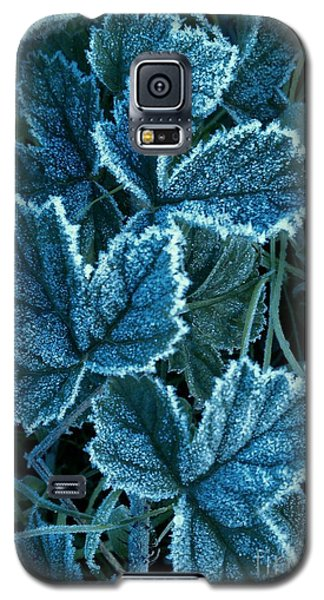 Frosty Ivy Galaxy S5 Case