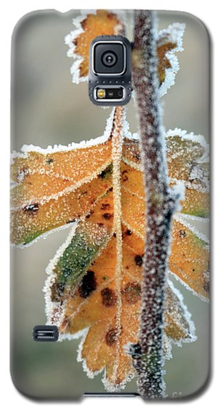 Frosty Leaf Galaxy S5 Case