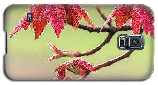 Frosty Maple Leaves Galaxy S5 Case