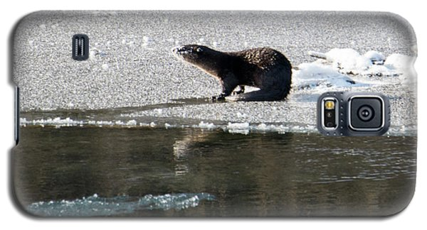 Frosty River Otter  Galaxy S5 Case by Mike Dawson