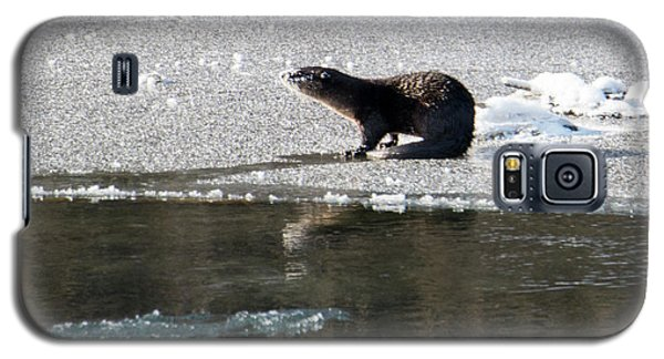 Otter Galaxy S5 Case - Frosty River Otter  by Mike Dawson