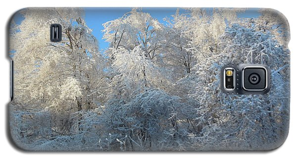 Galaxy S5 Case featuring the photograph Frosty Trees by Rockin Docks Deluxephotos