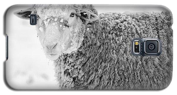 Sheep Galaxy S5 Case - Frozen Dinner by Mike  Dawson