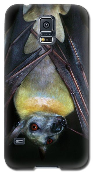 Galaxy S5 Case featuring the photograph Fruit Bat by Anthony Jones