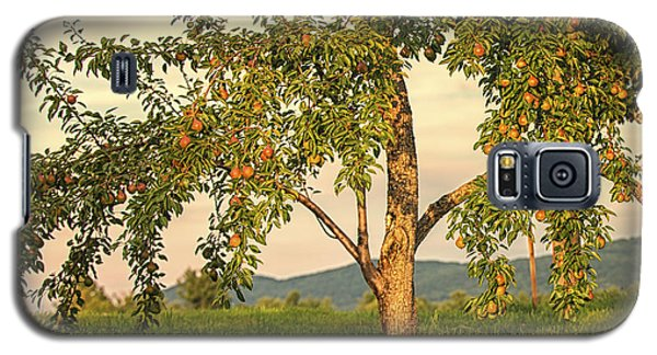Fruit In The Orchard Galaxy S5 Case