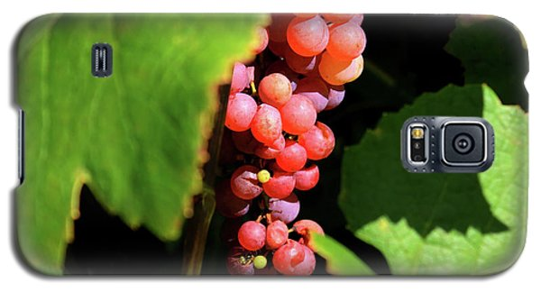 Fruit Of The Vine Galaxy S5 Case
