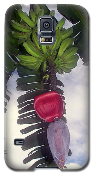 Fruitful Beauty Galaxy S5 Case by Karen Wiles