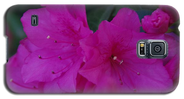 Galaxy S5 Case featuring the photograph Fuchsia Azaleas by Robyn Stacey