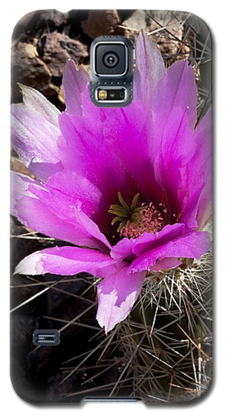 Galaxy S5 Case featuring the photograph Fuchsia Cactus Blossom by Phyllis Denton