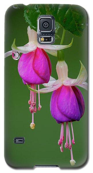Galaxy S5 Case featuring the photograph Fuchsia Flower, Nuwara Eliya, 2012 by Hitendra SINKAR