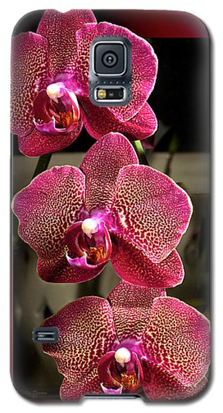 Fuchsia Orchids Oof Galaxy S5 Case by Phyllis Denton