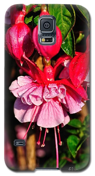 Fuchsias With Droplets Galaxy S5 Case