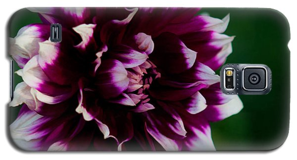 Galaxy S5 Case featuring the photograph Fuffled Petals by Cherie Duran