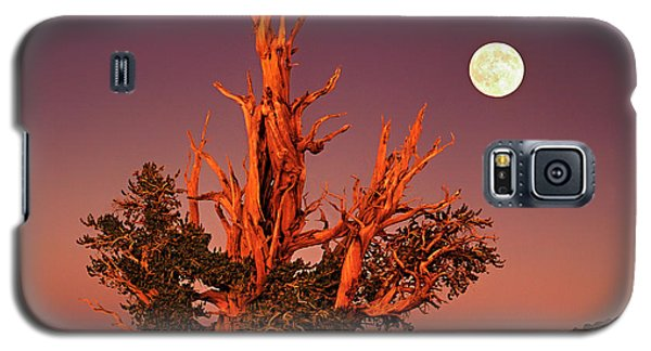 Galaxy S5 Case featuring the photograph Full Moon Behind Ancient Bristlecone Pine White Mountains California by Dave Welling