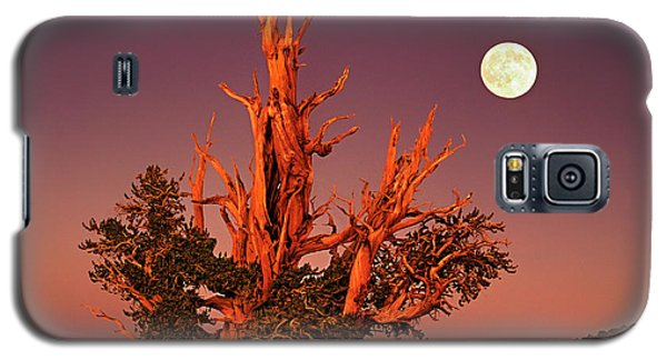 Full Moon Behind Ancient Bristlecone Pine White Mountains California Galaxy S5 Case
