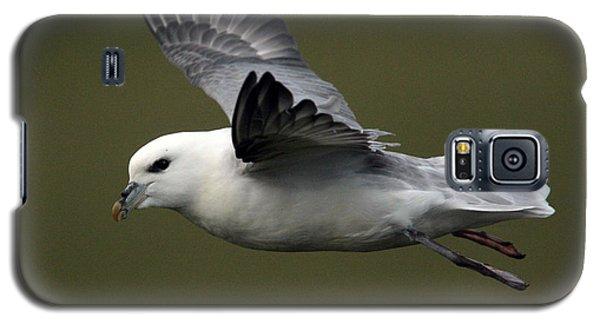 Fulmar In Flight Galaxy S5 Case