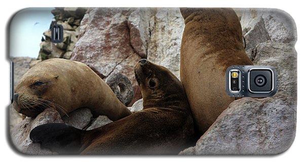 Galaxy S5 Case featuring the photograph Fur Seals On The Ballestas Islands, Peru by Aidan Moran