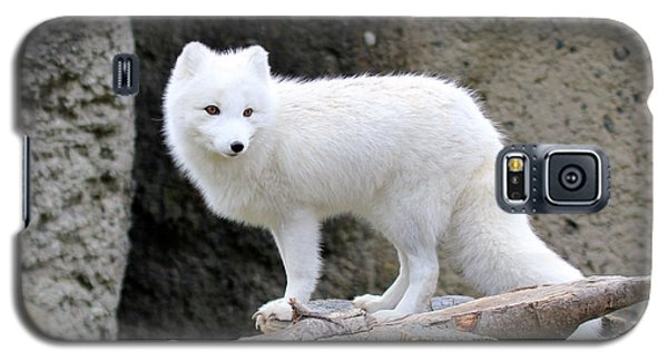 Furry Arctic Fox  Galaxy S5 Case by Athena Mckinzie