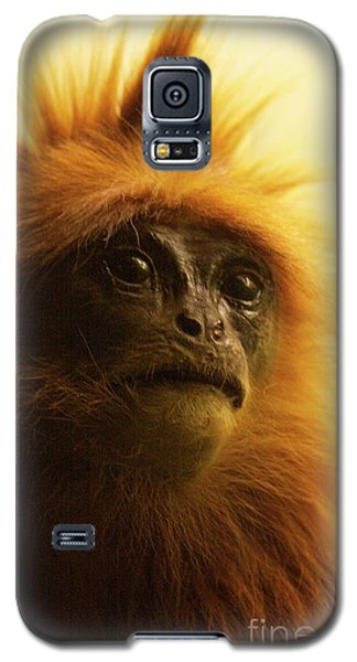 Galaxy S5 Case featuring the photograph Fuzzhead by Xn Tyler