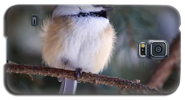 Fuzzy Chickadee Galaxy S5 Case