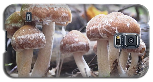 Galaxy S5 Case featuring the photograph Fuzzy Fungi by Martha Ayotte