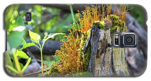 Galaxy S5 Case featuring the photograph Fuzzy Stump by Bill Pevlor