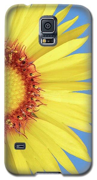 Gaillardia Aristata   Blanketflower Galaxy S5 Case by Jim Hughes