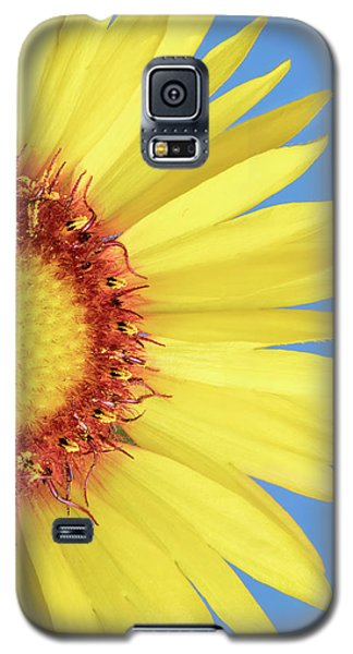 Gaillardia Aristata   Blanketflower Galaxy S5 Case