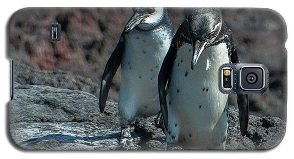 Galapagos Penguins  Bartelome Island Galapagos Islands Galaxy S5 Case