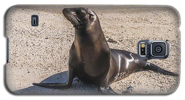 Galapagos Sea Lion Galaxy S5 Case