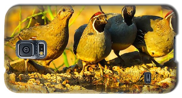Gambel's Quail Foursome Galaxy S5 Case