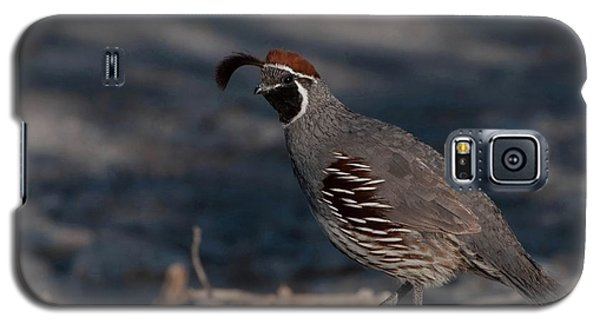 Gambel's Quail Galaxy S5 Case by Martina Thompson