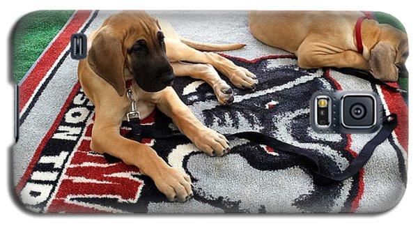 Gameday Great Dane Puppies Galaxy S5 Case