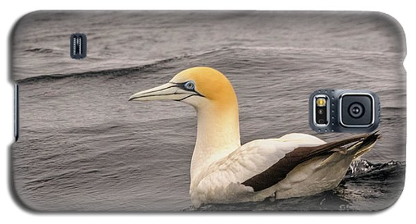 Gannet 5 Galaxy S5 Case