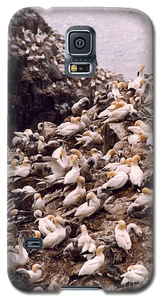 Gannet Cliffs Galaxy S5 Case by Mary Mikawoz