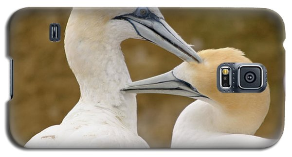 Galaxy S5 Case featuring the photograph Gannet Pair 1 by Werner Padarin