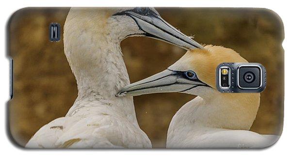 Gannets 4 Galaxy S5 Case