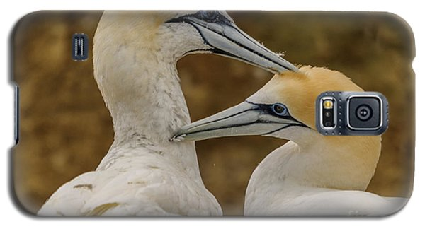 Gannets 4 Galaxy S5 Case by Werner Padarin