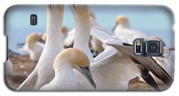 Galaxy S5 Case featuring the photograph Gannets by Werner Padarin
