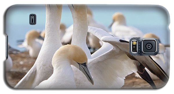 Gannets Galaxy S5 Case by Werner Padarin