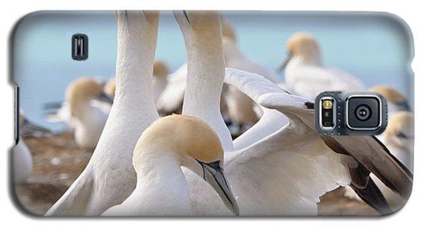 Gannets Galaxy S5 Case