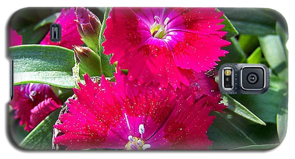 Galaxy S5 Case featuring the photograph Garden Delight by Sandi OReilly