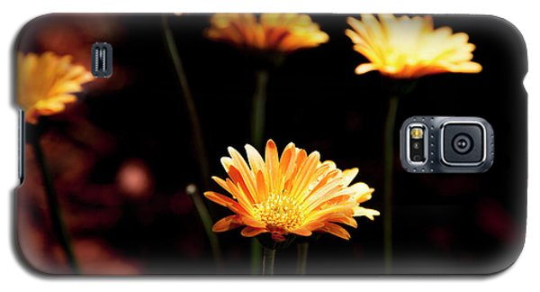Garden Light Galaxy S5 Case