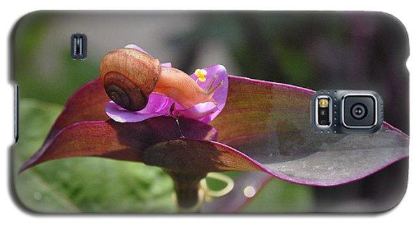 Garden Snails Wandering Galaxy S5 Case