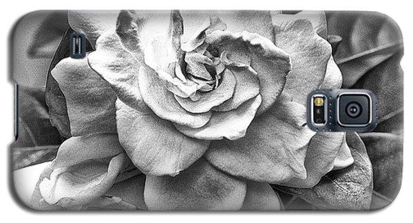 Gardenia Black And White Galaxy S5 Case by Barbara Middleton