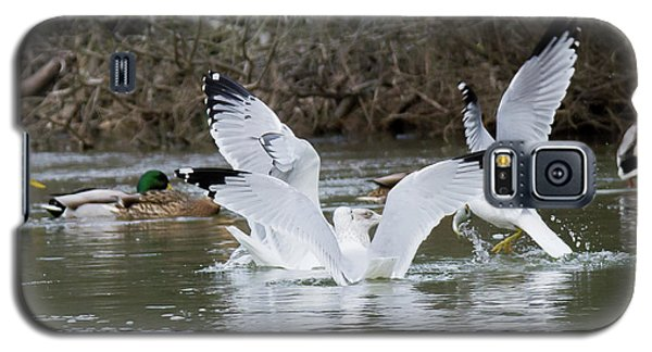 Galaxy S5 Case featuring the photograph Gathering Of Egrets by George Randy Bass