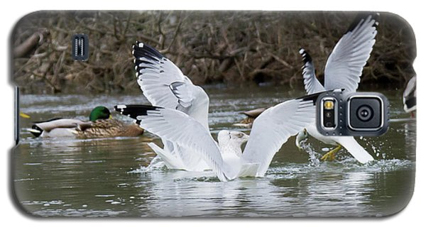 Gathering Of Egrets Galaxy S5 Case