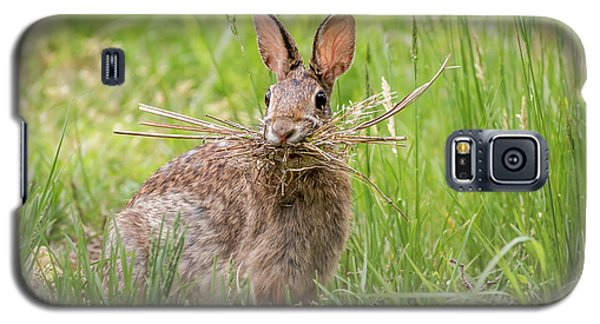 Gathering Rabbit Galaxy S5 Case by Terry DeLuco