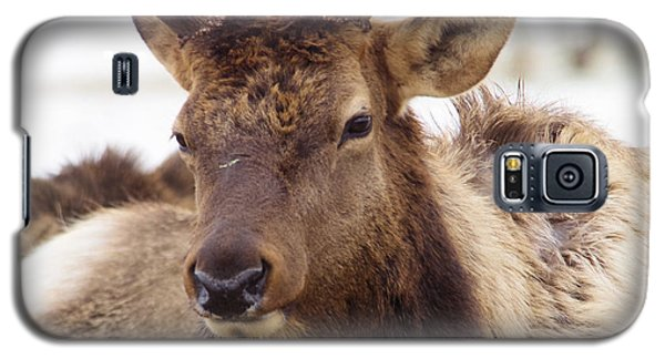 Galaxy S5 Case featuring the photograph Gaze From A Bull Elk by Jeff Swan