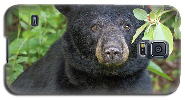 Gazing Black Bear Galaxy S5 Case